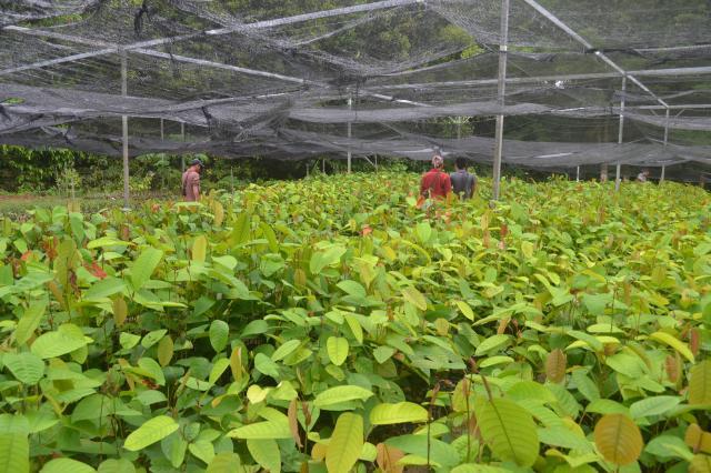 planting_nursery_convert_20161114102005