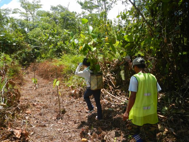 planting_seedling02_convert_20161114102107
